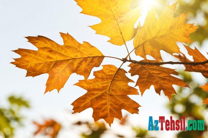 Payız haqqında  - 10 MARAQLI FAKT