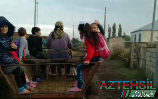 Saatlı rayonunda məktəblilər dərsə at arabası ilə gedir – Video
